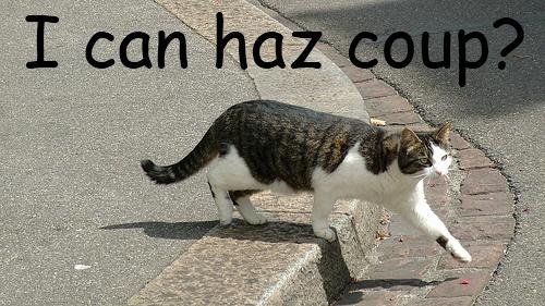 Turkmen Coup Cat