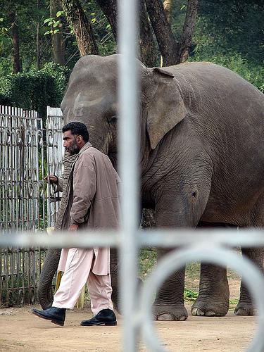 Elephant enclosed